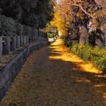 神宮外苑の紅葉を子供と楽しむには?いちょう祭りと公園をセットで!