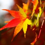 紅葉を見たいけど横浜で見れるの?子連れで楽しめる?お勧めはどこ?