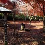 紅葉を横浜で子供と一緒に!自然で遊ぶ舞岡公園イベント参加